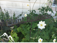 Plant kindness garden
